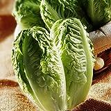 GROSEEDS - Vegetable Seeds, Lettuce - Little Gem, V-LET-012, 1500 Seeds Minimum Per Packet.