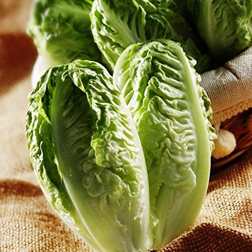 SeeKay Lettuce Little Gem Cos type Appx 2000 seeds