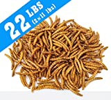 YUMMYWORMS Intact Dried Mealworms Bulk Treats for Backyard Chickens and Wild Birds, Premium Mealworm Treats, 11 Pounds, Pack of 2
