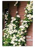 The Scroll Trellis Garden Trellis is 9 ft