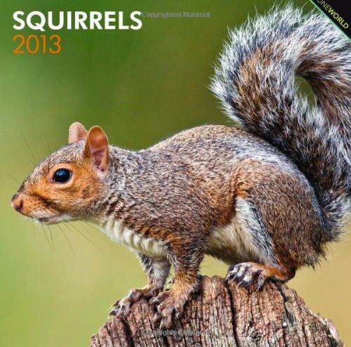 Squirrels 2013 - Eichhörnchen - Grauhörnchen - Original BrownTrout-Kalender