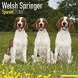 Welsh Springer Spaniel Calendar - Dog Breed Calendars - 2017 - 2018 wall Calendars - 16 Month by Avonside