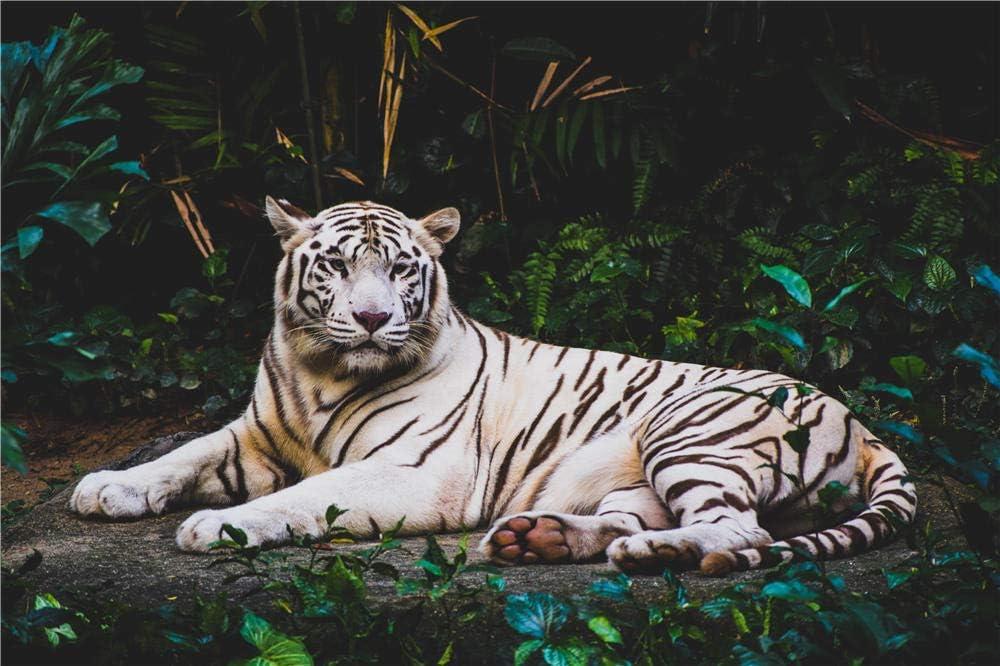 Rompecabezas para Adultos 1000 Piezas Tigre Albino Tumbado En El Suelo por La Noche Rompecabezas para Niño Amigo