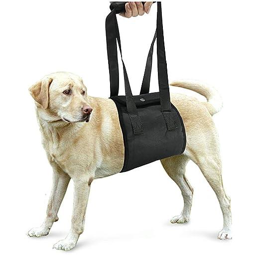 7 opinioni per Lalawow Supporto Del Cane Imbracatura Per Cani Per Lesioni Gambe Inferiori Delle