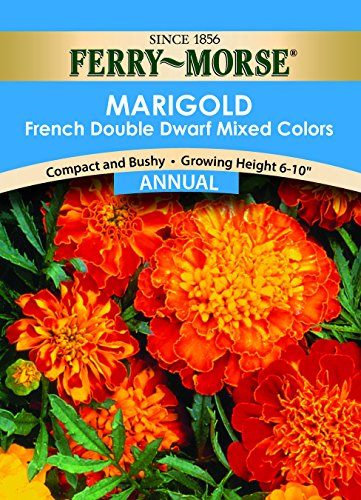 Ferry- Morse Marigold Dwarf Double Mixed Colors Flower Seed ()