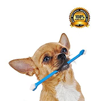 Perro con dos cepillos de dientes doble doble para cepillos de dientes por legado mascota suministros