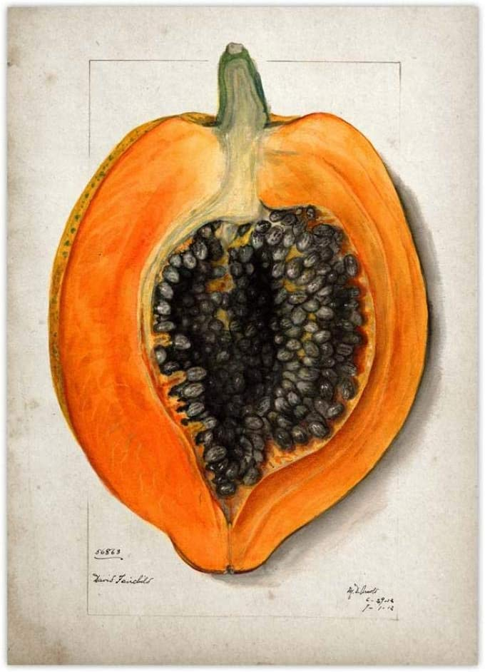 Fruit Posters Kitchen Wall Art Decor Vintage Poster Papaya Canvas Painting Living Room Dining Room Home Kitchen Decor Antique Picture 40x60cm Unframed