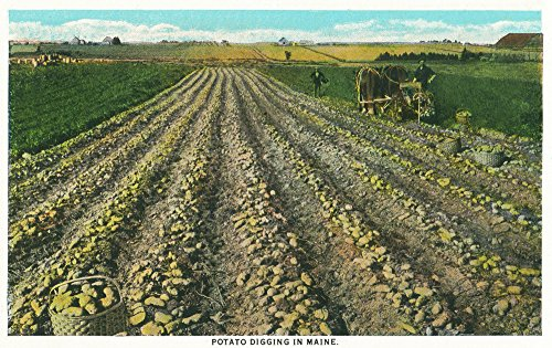 Maine - View of a Potato Farm in Maine (12x18 SIGNED Print Master Art Print w/ Certificate of Authenticity - Wall Decor Travel (Maine Potato)