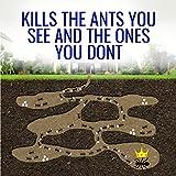 TERRO T300B Liquid Ant Bait Ant Killer, 12 Bait