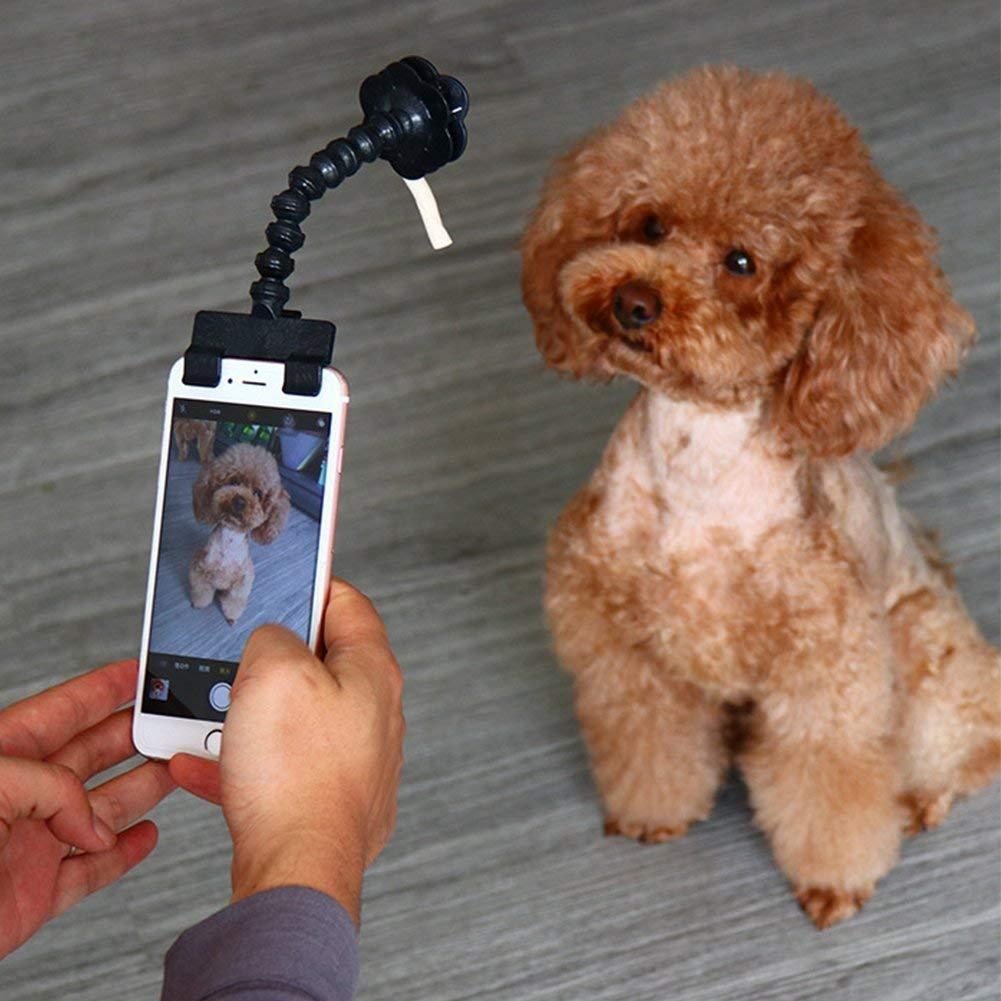 Accessoires pour selfies canins 61aDqgHU62L._SL1001_