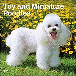 Amazoncom Toy And Miniature Poodles 2019 12 X 12 Inch