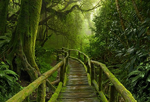 Leyiyi 7x5ft Photography Background Fairy Tale Rainforest National Nature Park Trees Retro Wooden Boardwalk Moss Summer Camp Honeymoon Travel Hiking Adeventure Photo Portrait Vinyl Studio Video Prop