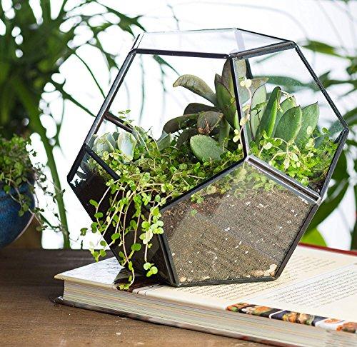 Geometric Terrarium Elitlife Modern Tabletop Indoor Plant Diy Glass