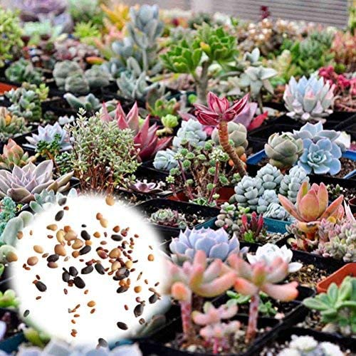 SUBTLE 400粒 混合多肉植物の種 ガーデンの装飾 植物の種 花 高い発芽率 簡単に育てる 観葉植物 開花 園芸