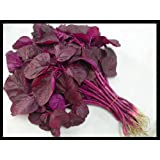 Edible Asian Chinese Tender Round Leaves RED Amaranth Seeds :37,000 seeds (30g) by