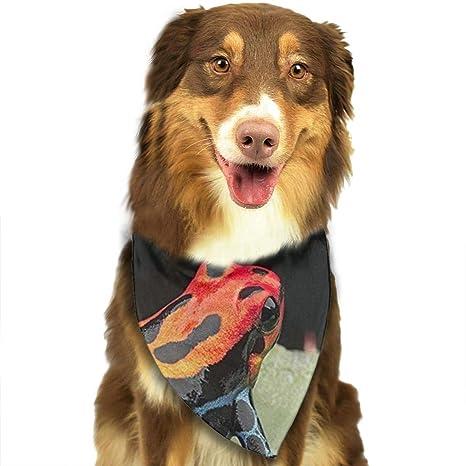 Amazon.com: Chemibo - Bandana para perro, baberos ...