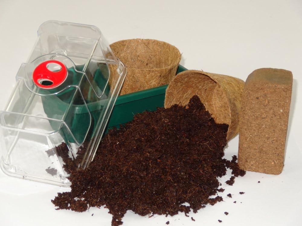 8 graines SAFLAX Rose du d/ésert Kit de culture Adenium obesum
