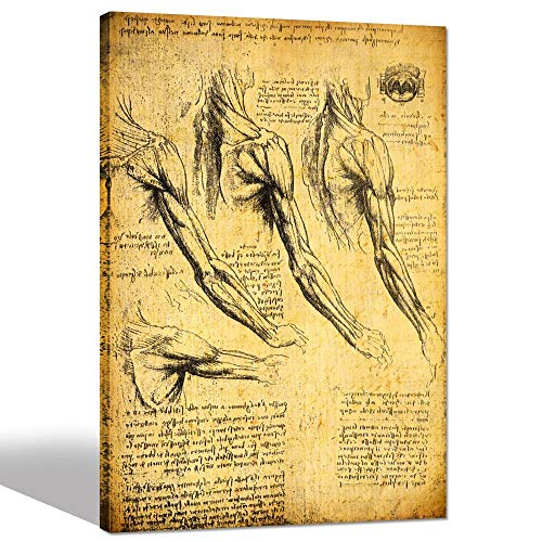 (sechars - Anatomy Art Prints by Leonardo Da Vinci Giclee Canvas Print Vintage Wall Art Decor Famous Painting Reproduction Canvas Artwork Ready to Hang -24