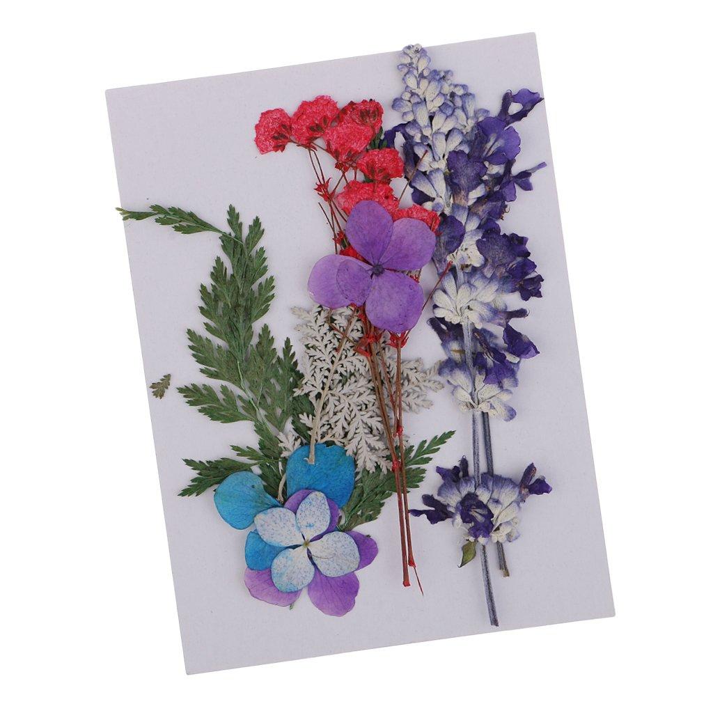 Baoblaze Echte Blumen 0.5-3cm Multi1 gepresst und getrocknet
