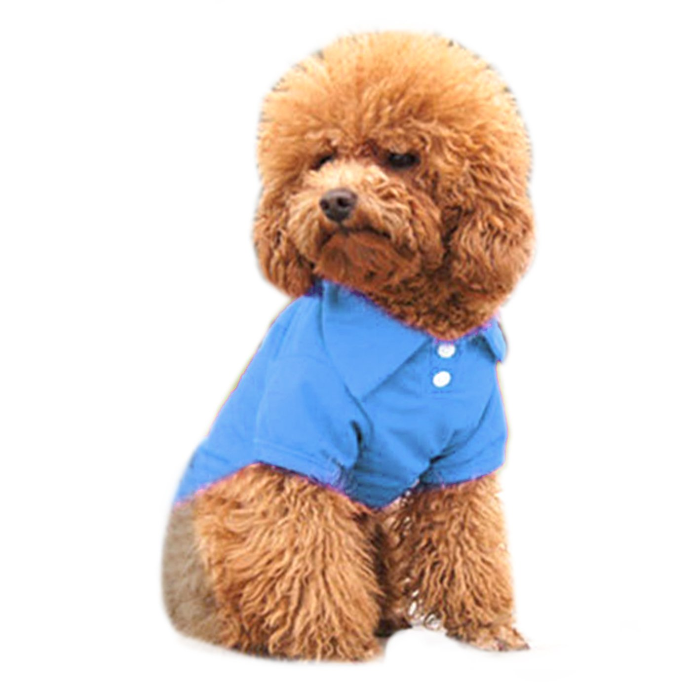 bluee Medium bluee Medium Alfie Pet by Petoga Couture Hollis Solid color Polo Shirt color  bluee, Size  M