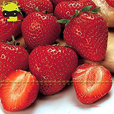 Seed Fruits Vegetable Fruit Seed Camarosa red Strawberry Seeds, 100 Seeds/Pack, Giant Strawberry Organic Fruit/Vegetables Non-GMO Bonsai Pot for Home Garden