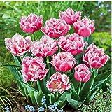 Seeds House- Caiuet 100pcs Tulip Seeds, Rarity Garden Bulb Flower Seeds Colorful Flower Seeds Tulips Garden Ornamental Flower