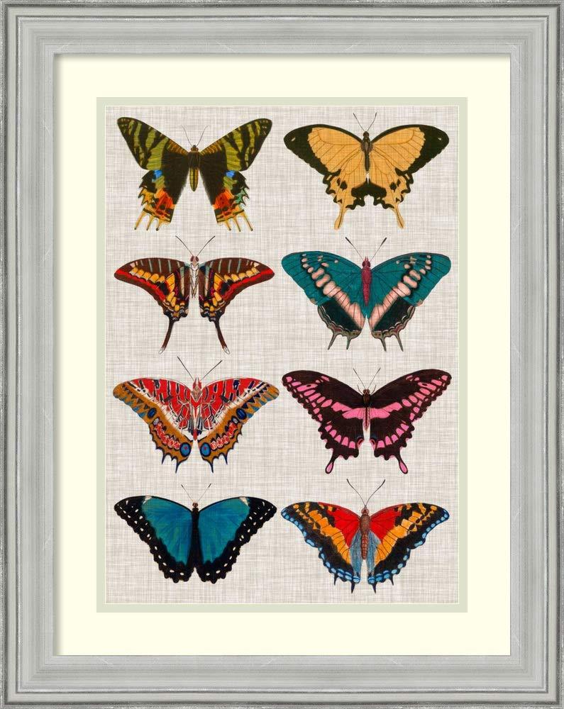 Amazon com framed wall art print polychrome butterflies i