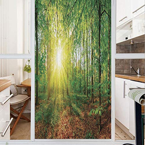 Decorative Window Film,No Glue Frosted Privacy Film,Stained Glass Door Film,Glade in the Forest at Sunset Evening Meadow Greenland Mother Earth Wildlife Picture,for Home & Office,23.6In. by 78.7In Gre