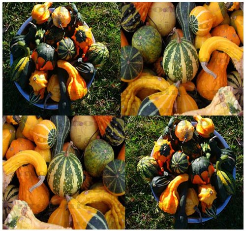 30 LARGE & SMALL MIX Gourds seeds - 15 DIFFERENT TYPES Bushel Dipper Shenot Swan