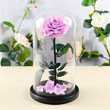 Amazon.com: XJ&DD Beauty and The Beast Rose,Eternal Flower ...