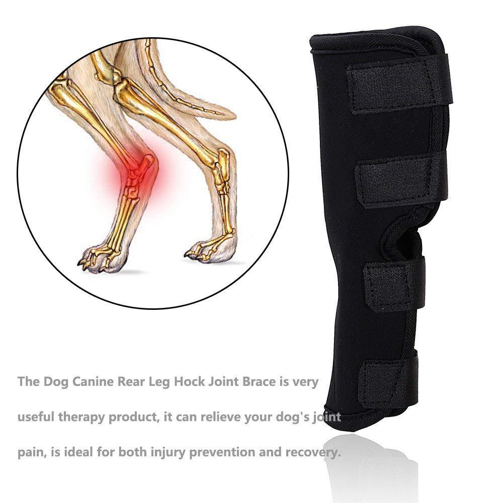 Amazon.com: Lifeunion Dog Canine Leg Brace Bandages Pet Dog ...
