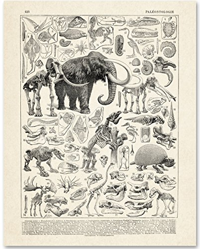 Paleontology - 11x14 Unframed Art Print - Makes a Great Gift Under $15 for Dinosaur Lovers And Child's Room Decor