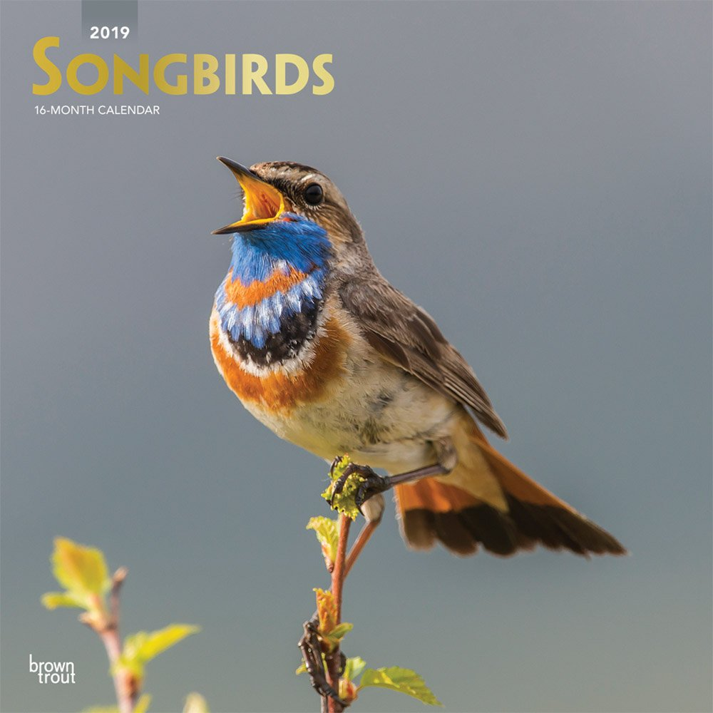 Songbirds 2019 12 x 12 Inch Monthly Square Wall Calendar with Foil Stamped Cover, Wildlife Animals Birds (Multilingual Edition) by BrownTrout Publishers