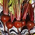 Everwilde Farms - Early Wonder Beet Seeds - Gold Vault