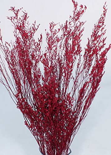 GreenFloralCrafts Caspia (Floral Filler Greenery) Dried Flowers, Grasses - Red ()