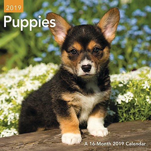 - Puppies Mini Wall Calendar (2019)