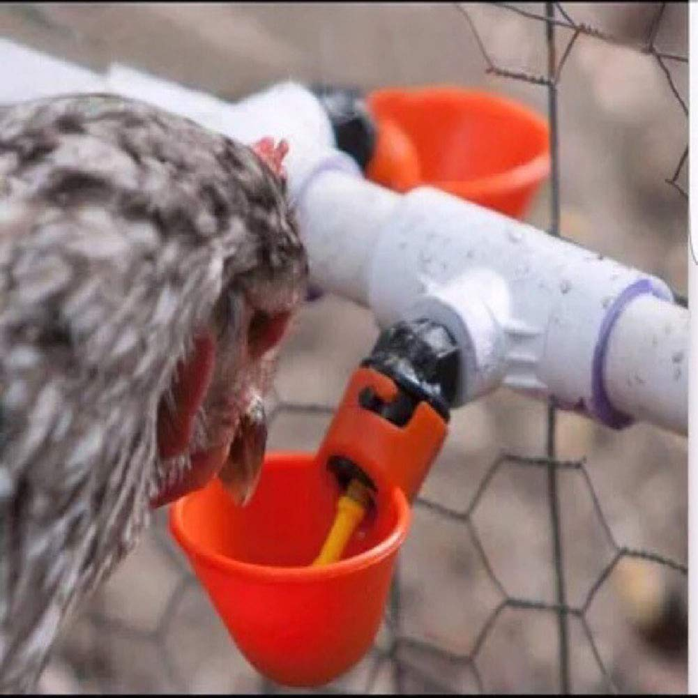 Farm /& Ranch Automatic Chicken//Poultry Drinkers//Waterers with Cups Watering Cups Bowls Red Plastic Backyards Chicken Flock Duck Bird Water Feeder
