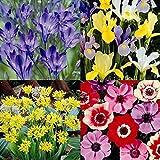 Spring/Summer bulb garden - 40 flower bulbs