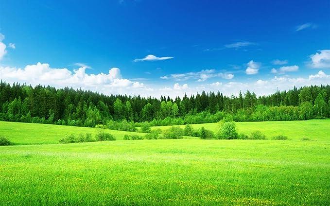 Amazon Co Jp 美しい自然の風景 フィールド 緑の草 木 キャンバス