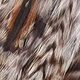 Hareline Grizzly Variant Neck Hackle (Chinchilla)