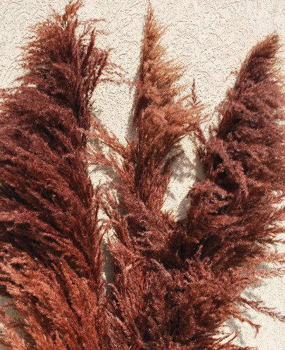 Dried Pampas Grass - Brown Color Large 3 Plume (Branch) Bunch -- Single Bunch - Long Stem - Dried Grass