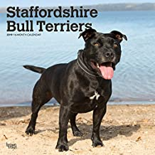 Staffordshire Bull Terriers 2019 12 x 12 Inch Monthly Square Wall Calendar, Animals Dog Breeds (Multilingual Edition)