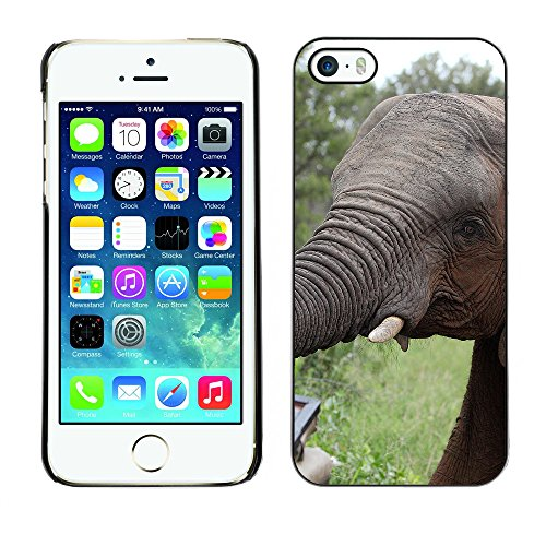 Premio Sottile Slim Cassa Custodia Case Cover Shell // F00015696 l'éléphant // Apple iPhone 5 5S 5G