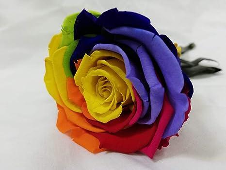 Almaflor Rosa eterna Gratis tu envío. Rosas eternas Naturales Arco-Iris con Cabeza 7