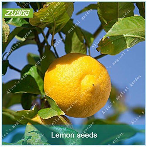 ZLKING 20 semillas Pcs china fruta del limón árboles transgénicos sanos Bonsai orgánico fresco non para Fruit Juice plantas de especias