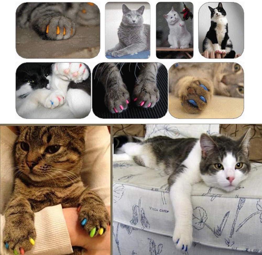 DAYOLY Tapas de Uñas para Gato 100pcs Cuidado de Las uñas Prevención de Arañazos Mascotas de Silicona Cat Nail Caps (M): Amazon.es: Productos para mascotas