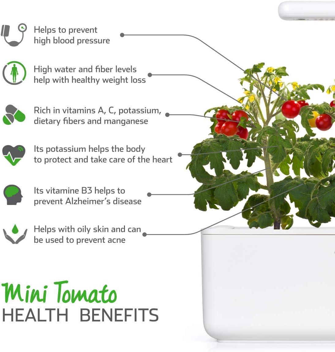 Emsa 3 Cápsulas Tomate Click & Grow, Semillas apta para Smart ...