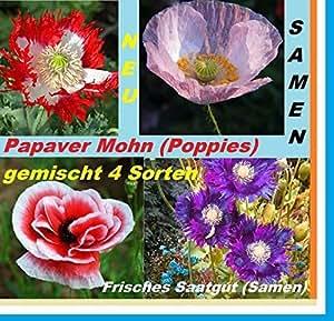 25 Papaver amapola amapolas mezclan planta jardín de semillas semilla fresca #165