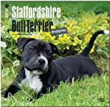 Staffordshire Bull Terrier Puppies 2015 Square 12x12 (Multilingual Edition)