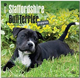 Descargar Bittorrent En Español Staffordshire Bull Terrier Puppies 2015 Wall Buscador De Epub